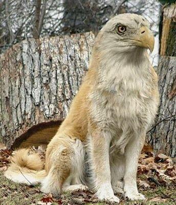 american eagle dog