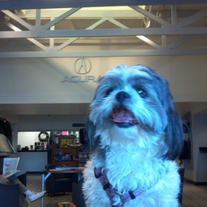 My little puppy at Marin Acura's service waiting room