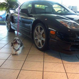 My little puppy is in love with the NSX sitting one the showroom floor at Marin Acura!